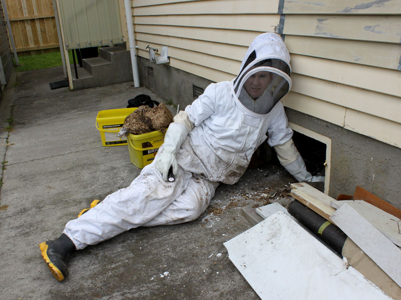 PestCo service technician Mike Wills in protective clothing to remove the nest.